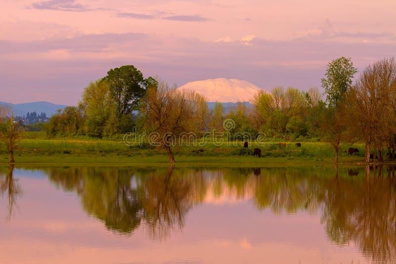 Mount St Helens Reflection during Sunset Portland Oregon royalty free stock images
