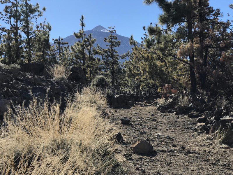 Mount Teide a volcano. On Tenerife stock photos
