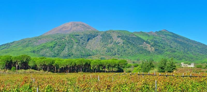 Mount Vesuvius. The Mount Vesuvius in Italy royalty free stock photo