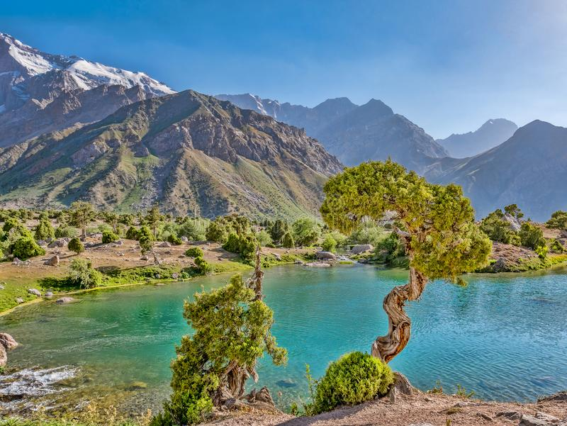 Mountain湖用绿松石水和在sunshin的一棵杜松树 库存图片