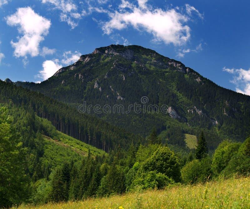 Mountain. Choc mountain in Orava region, Slovakia royalty free stock photography