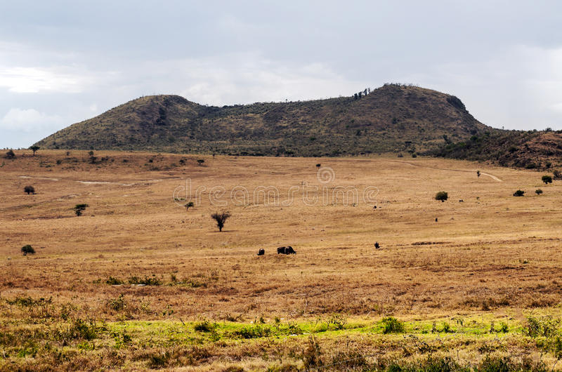 Mountain on the African savannah. Of Kenya on a cloudy day stock images