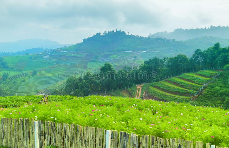 Mountain agriculture field. Vegetable plantation scene in Mon Cham a hill ridge in the area of Mong Nong Hoi village, Mae Rim. Chiang Mai Thailand stock photos