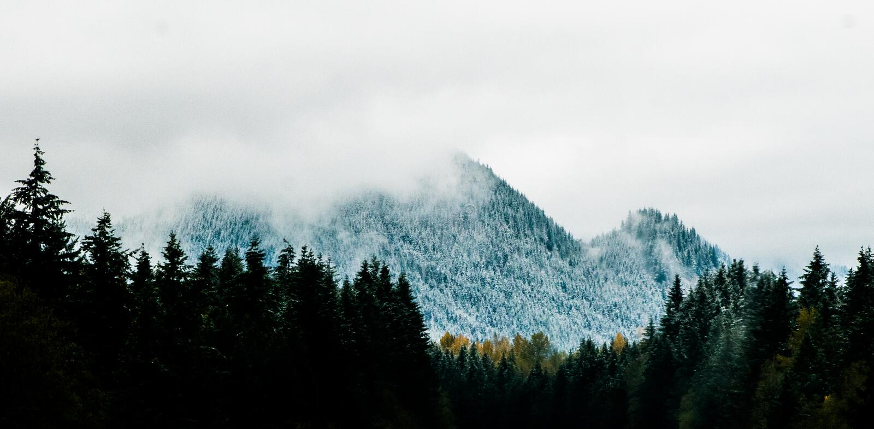 Mountain Alps Near Pine Trees stock photos