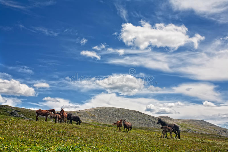 Mountain Altai royalty free stock image