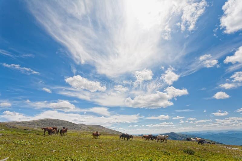 Mountain Altai royalty free stock photo