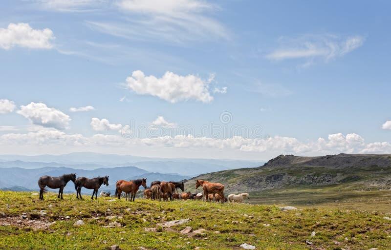 Mountain Altai royalty free stock image