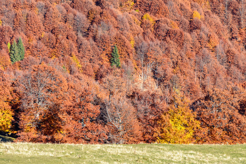 Mountain autumn background with colorful trees. Horizontal. Panoramic view over colorful mountain forest with green, golden, brown, orange, yellow tones stock image