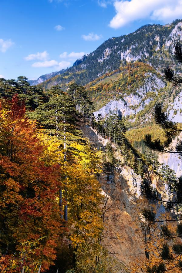 Mountain autumn picturesque landscape with colorful forest. Vertical Photography. stock photography