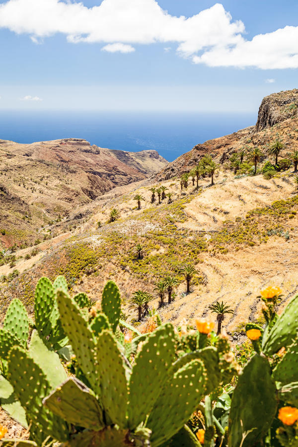 Mountain beautiful landscape, island and ocean. Beautiful mountains landscape yellow meadow green cactus with flowers over blue sky and clouds, Canary Islands La stock photos