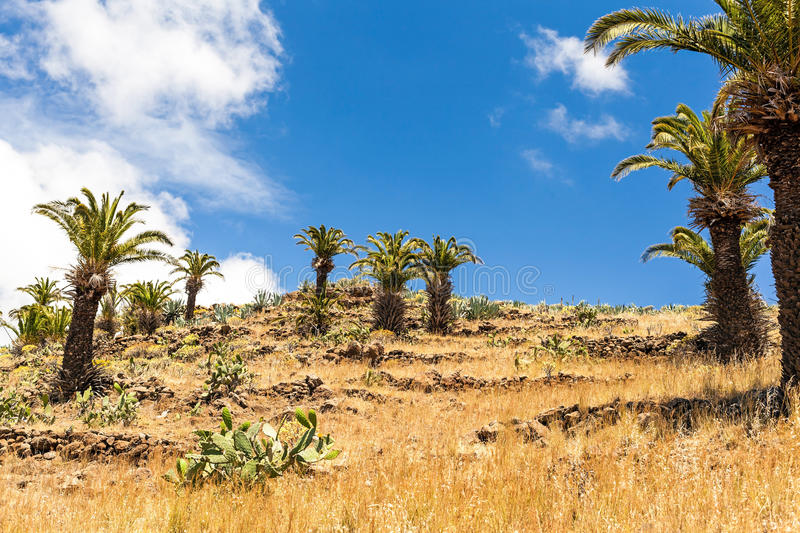 Mountain beautiful landscape, palm trees. Beautiful hiking mountains landscape yellow meadow, blue sky clouds and palm trees, Canary Islands La Gomera, Spain stock photo