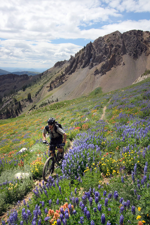 Mountain bike. Zooming past a hillside of wildflowers stock photos