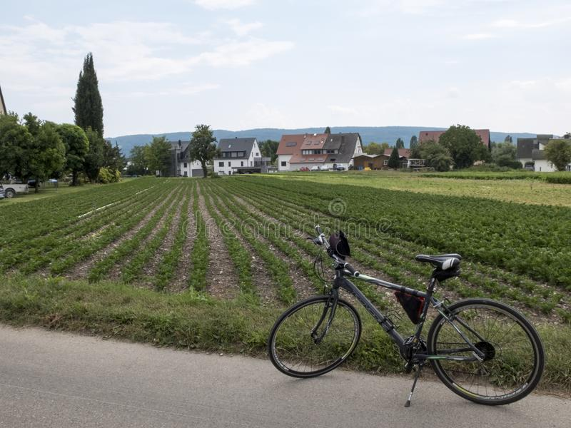 Mountain Bike in a field of celery royalty free stock images