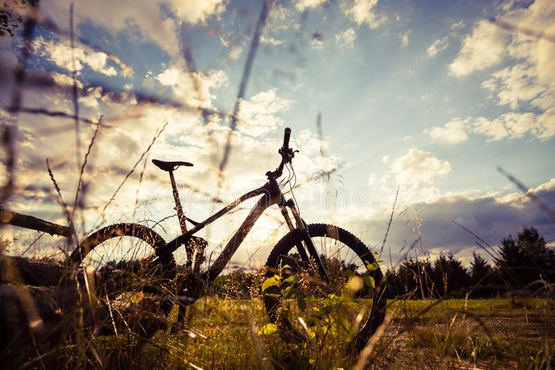 Mountain bike MTB on green summer forest trail, inspirational la. Ndscape. Cycling bike on rural country trail. Sport fitness motivation and inspiration in royalty free stock image