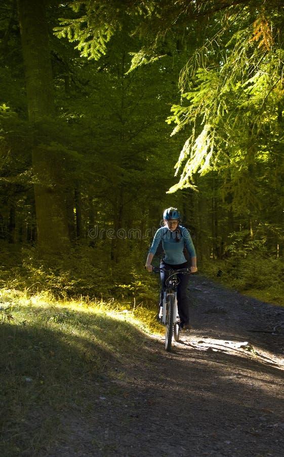 Download Mountain biker stock image. Image of girl, forest, bike - 21603065