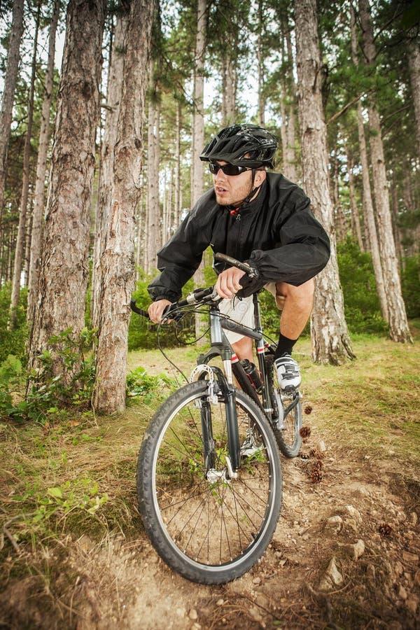 Download Mountain biker stock image. Image of bicycle, muscular - 26208463