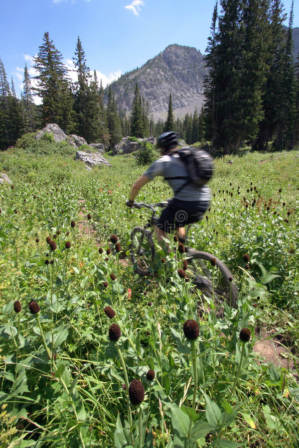 Download Mountain biker blur stock photo. Image of free, casual - 2973982