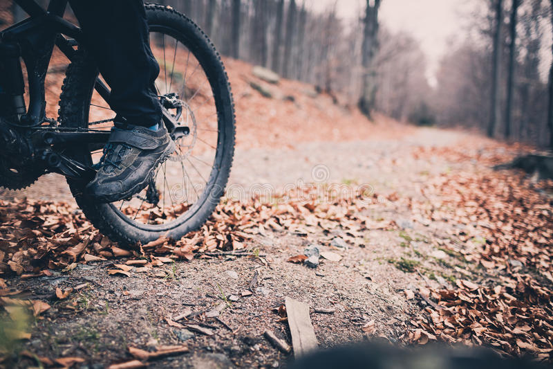 Mountain biker on cycling trail in woods royalty free stock photography