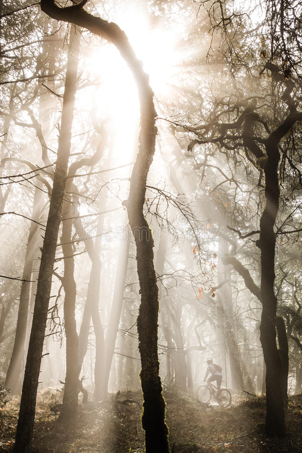 Mountain biker in misty forest. stock images
