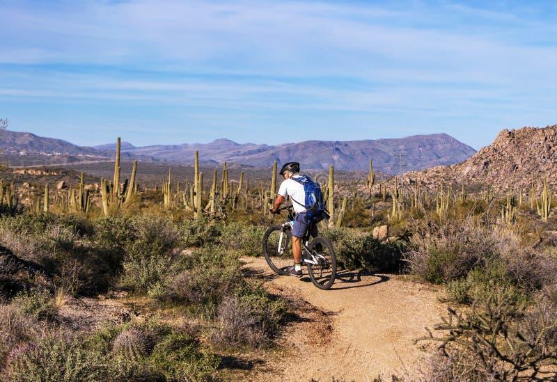 Mountain Biker su un sentiero del deserto in Arizona con Cactus fotografia stock