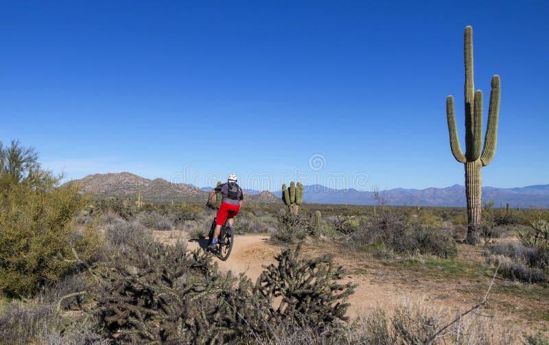 Mountain Biker sul sentiero del deserto in Arizona immagine stock libera da diritti