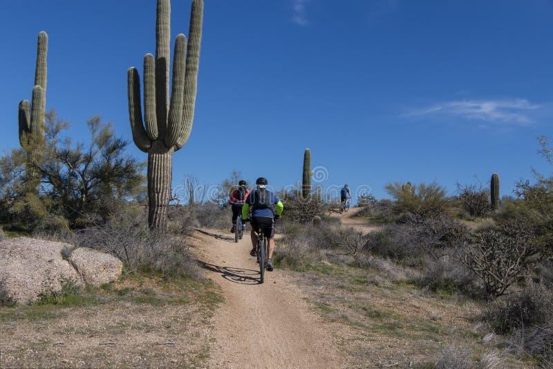 Mountain Bikers su Desert Trail in Scottsdale AZ immagine stock