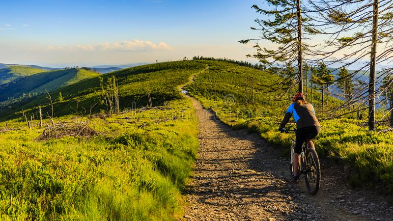 Mountain biking cycling at sunset in summer mountains forest lan royalty free stock photography