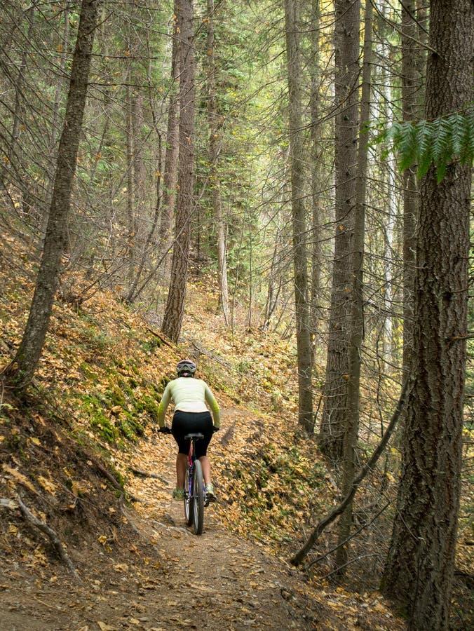 Mountain biking through forest royalty free stock photo