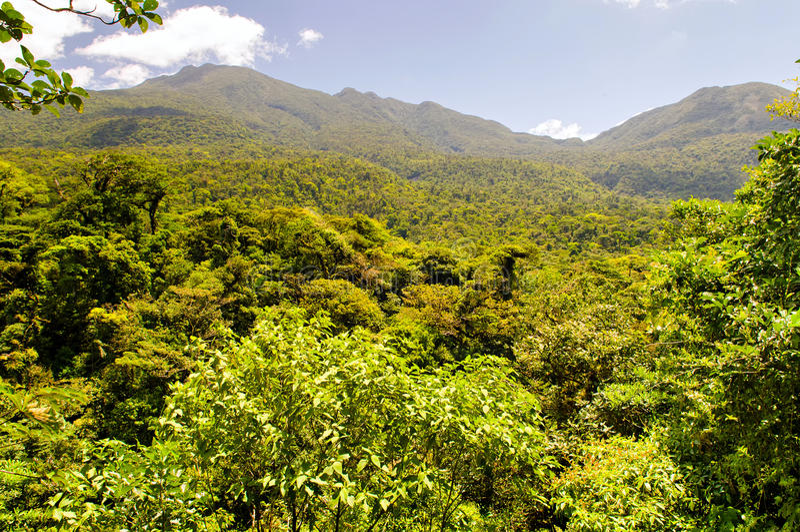 Mountain cloud rainforest & x28;Costa Rica, Santa Elena& x29; stock images