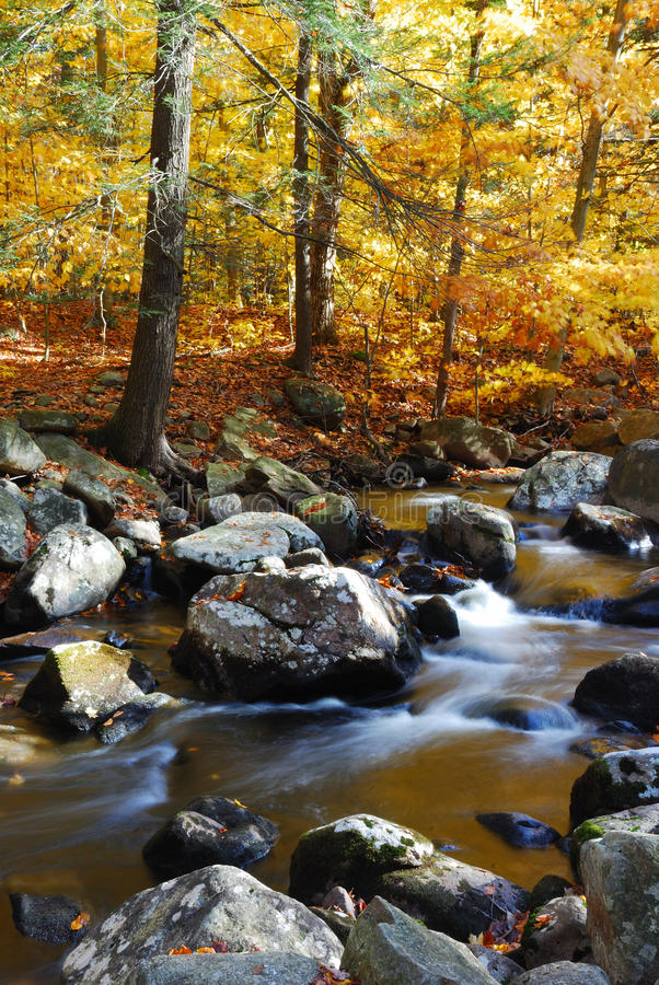 Mountain Creek. With Autumn woods, rocks, yellow foliage and reflections stock image