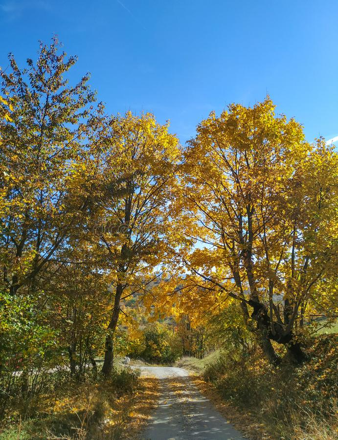 Mountain crushed stone path between two maple trees in bosnian mountains. Clear blue sunny sky in autumn fall with yellow and stock image