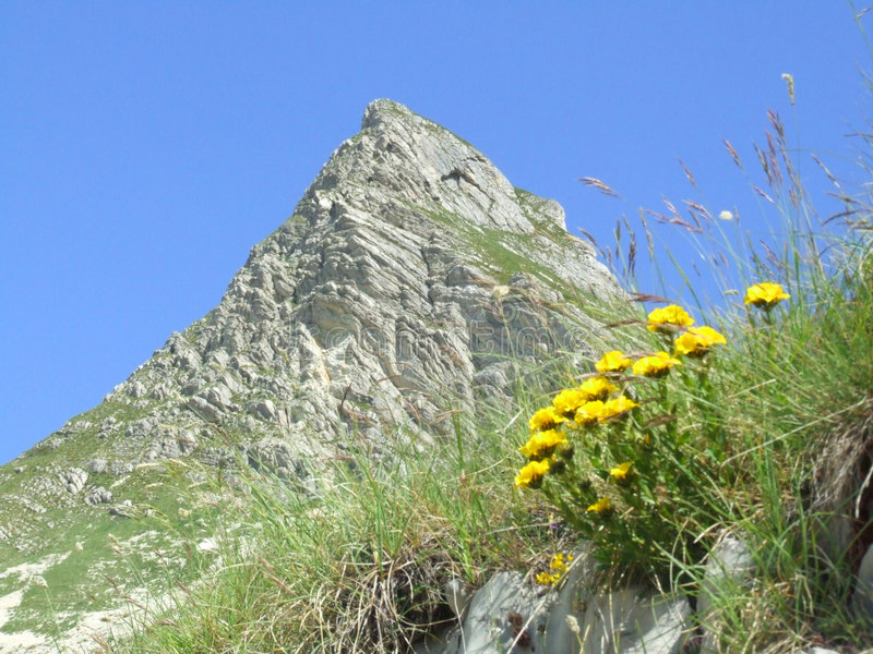 Mountain Durmitor. Flowers on the mountain Durmitor in Montenegro royalty free stock images