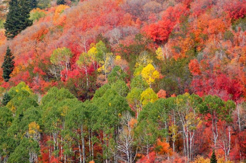 Mountain fall colors stock photos