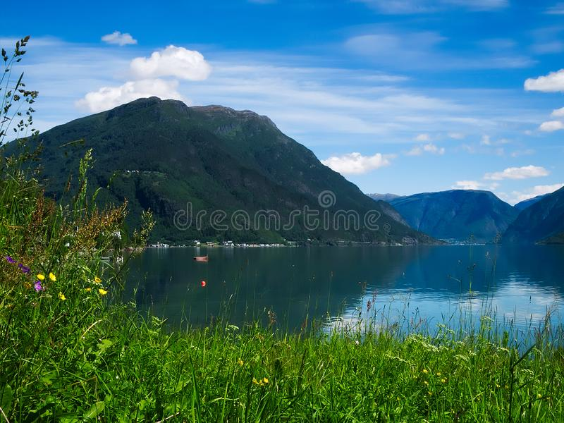 Mountain and fjord landscape in Norway with flowers and blue sky stock image
