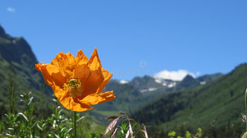 Mountain flower stock images