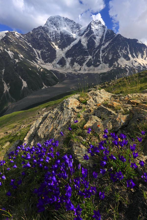 Mountain flowers stock images