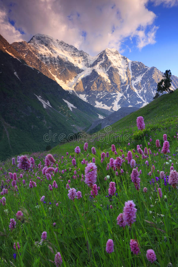 Free Mountain Flowers Stock Photography - 10990382