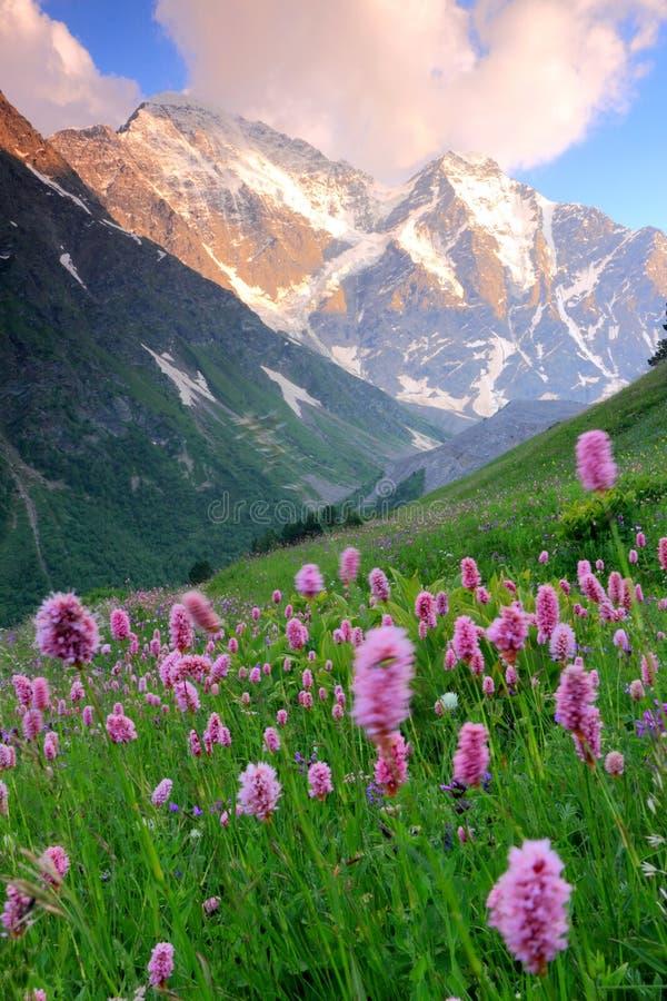 Free Mountain Flowers Stock Photos - 13203823
