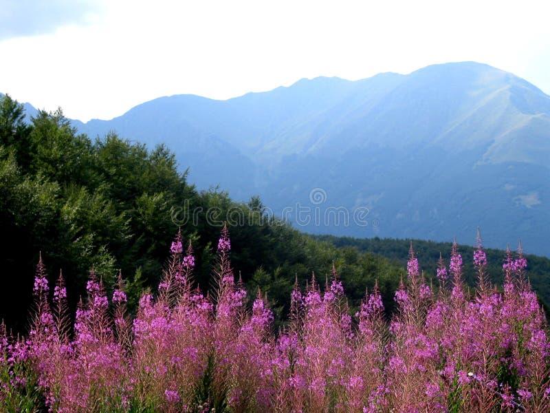 Mountain flowers stock image