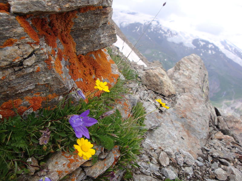 Download Mountain flowers stock image. Image of boulder, color - 15701443