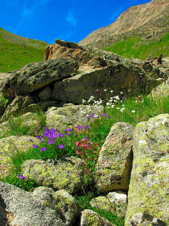 Free Mountain Flowers Royalty Free Stock Photos - 7459778
