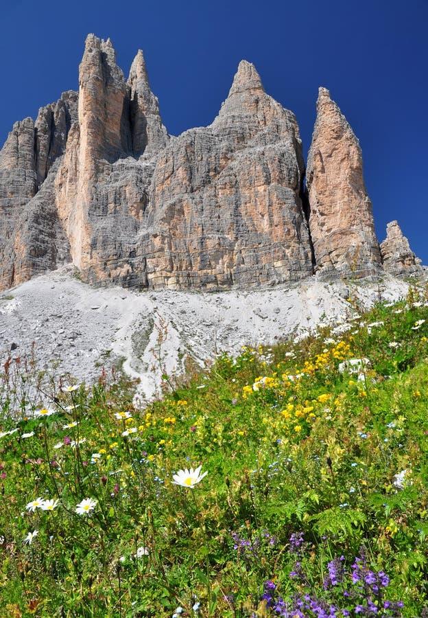 Mountain flowers in Dolomites Mountains stock photo