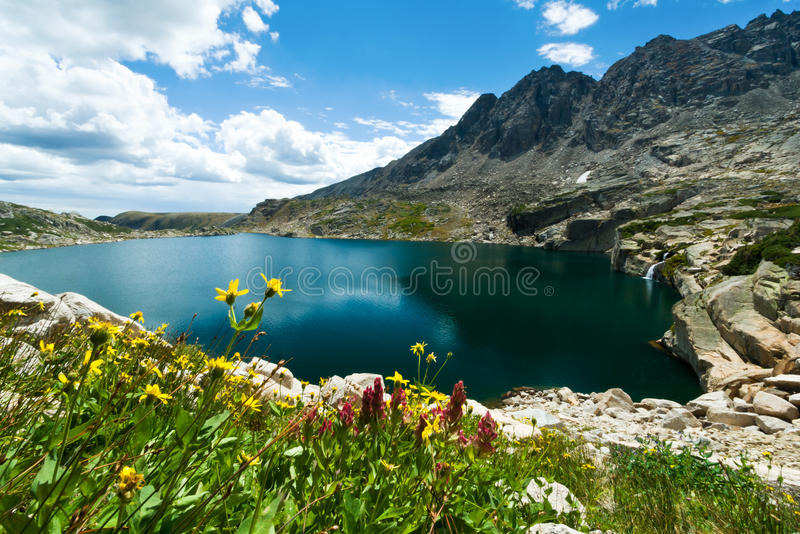 Mountain Flowers Landscape Colorado royalty free stock photography