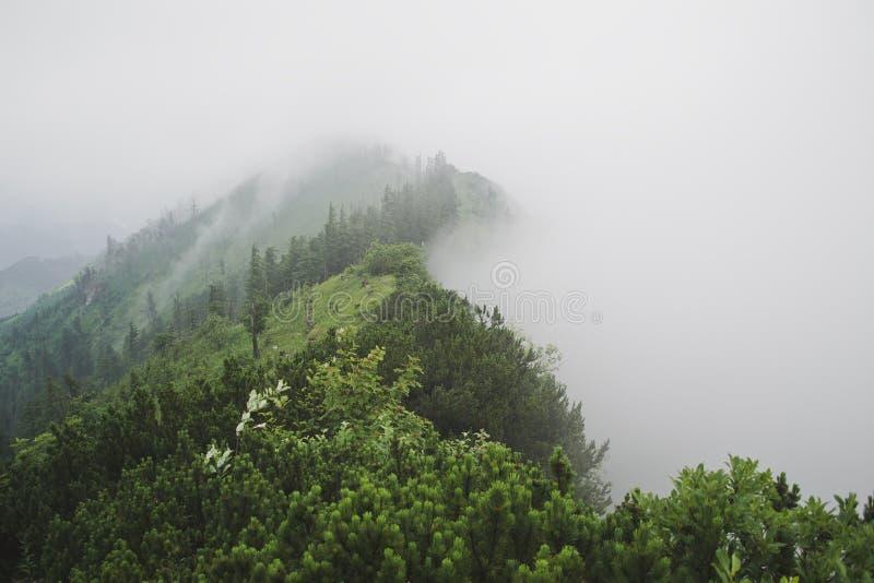 Mountain fog. Mountain crest in dense fog stock photos