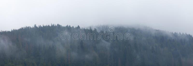 Mountain fog forest, misty foggy landscape. Dark nature mist stock photography