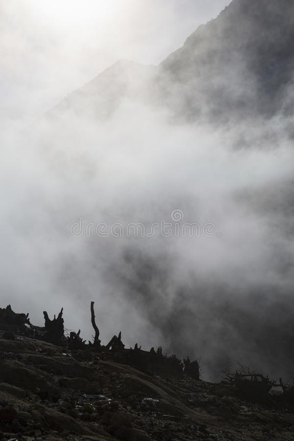 Mountain fog. Gloomy mood with mist around burnt remnants of small trees royalty free stock photos