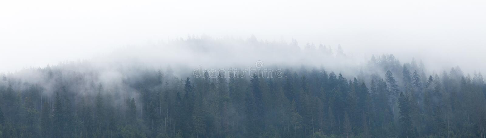 Mountain foggy background, forest fog, mist landscape stock photo