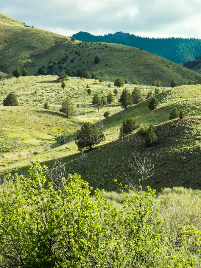 Mountain foothills in spring. Green spring growth on meadows and trees in rolling foothills of the Ochoco Mountains in eastern Oregon royalty free stock images