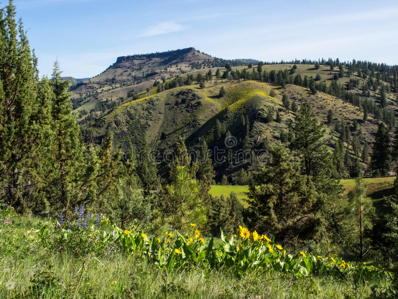 Mountain foothills in spring. Green spring growth on meadows and trees in rolling foothills of the Umatilla Mountains in eastern Oregon stock photos