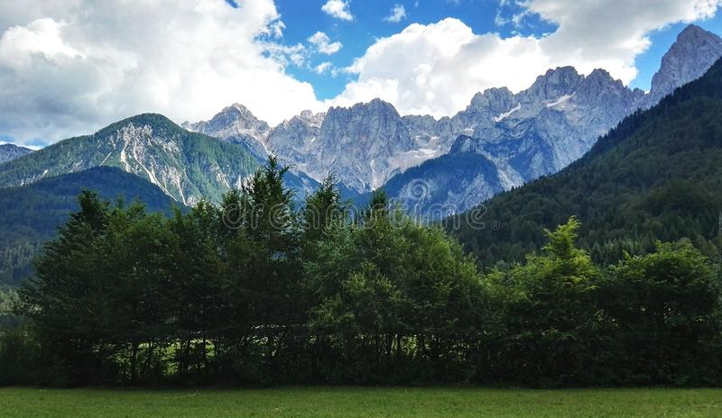 Mountain and Forest stock photography
